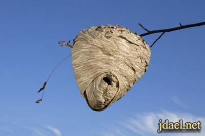 استخدام مواد طبيعية للتخلص الحشرات البيت والحديقة وللجسم