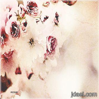 خلفيات بلاك بيري جذاب ياورد رمزيات بي بي 2013