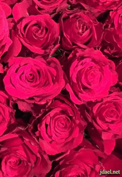 صور وتساب ورد الحب بالوان رومنسيه للبنات