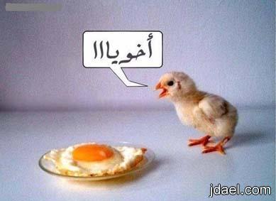 اضحك وكركر نكت مصريه بالصور نكت الشعب المصري