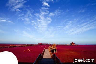 اغرب شاطئ بالون الاحمر الصين يتحول لمحميه طبيعيه