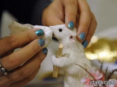 اغرب مشروع فني تحنيط وحشو الفئران لتصبح بصور البشر