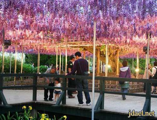 صور سياحية للطبيعة الخلابة في حديقة اشكاكيا في اليابان