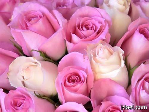 صور باللون الوردي واجمل اللقطات المنوعه بين الطبيعه والحب والدلع