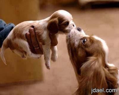 صور حنان وحب الام الحيوانات المفترسه والاليفه