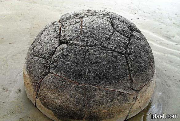 صور اغرب الصخور نيوزيلندا صخور بشكل السلحفاة غرائب الصور