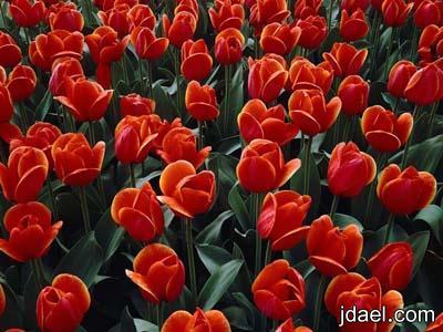 رمزيات زهور وقطرة ندى وتساب جالكسي للبنات والشباب