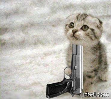 مشاهد ومواقف احلى قطط صور خفيفة الظل بالحوار القطه