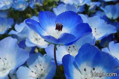 السياحه اليابان بداخل المنتزه الازرق صور سياحيه للحديقه الزرقاء