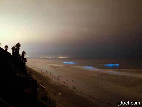 عوالق نباتيه تنشر ضوء ساحر على شاطئ المالديف