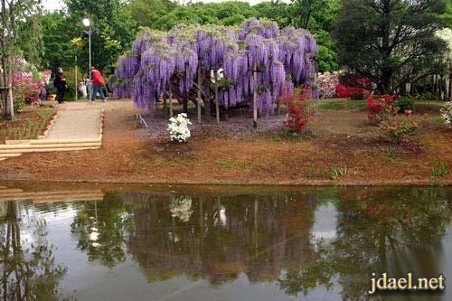 صور سياحية للطبيعة الخلابة حديقة اشكاكيا اليابان