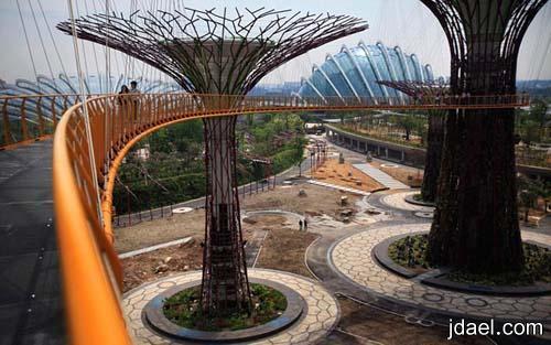 اضخم الاشجار الصناعيه بجذوع صلب وخرسانه سنغافوره