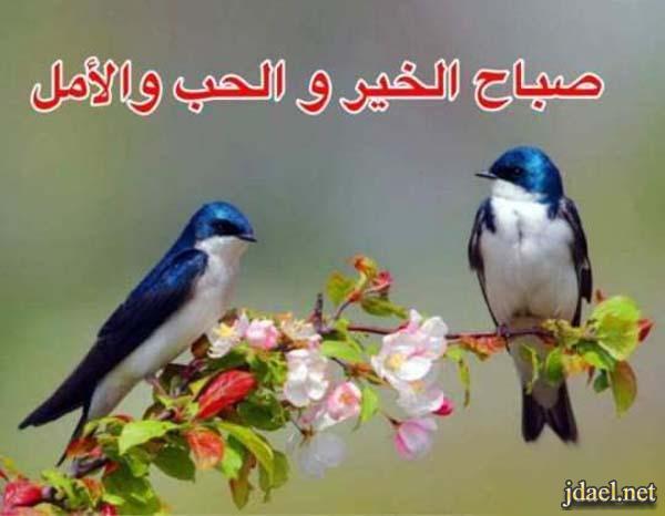 صور ورد روعة صباح الخير والحب والامل الله