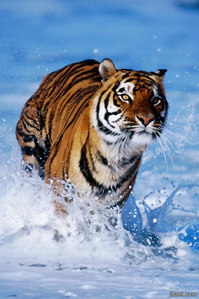 صور جميله متنوعه مناظر طبيعيه وصور عالم الحيوان