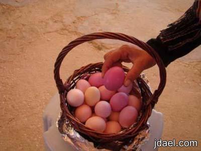 صور غريبه لدجاج يفقس بيض ملون دون العبث غرائب الصور