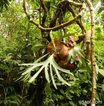 جوله سياحيه في حديقة التوابل في جزيزة بينانج في ماليزيا