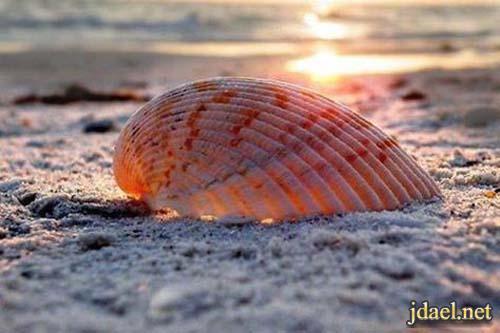 اصداف وقواقع بالوان روعة واجمل مناظر البحر ورمال الشاطئ