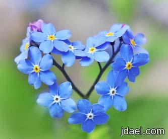 رمزيات قلب ومعنى واتس بلاك بيري صور رمزيه قلوب وتساب