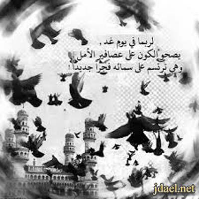 رمزيات عصافير الامل وتساب جالكسي ابيض واسود