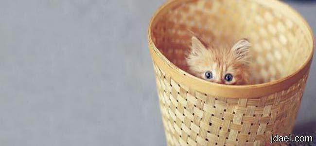 اغلفة فيسبوك حيوانات اليفه وشرسه غلاف قطه دلوعه للفيس بوك