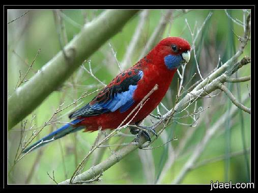 روعة الخلق صور اجمل الوان الطيور