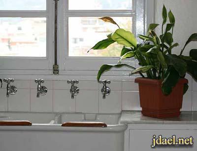 نصائح روعه لاختيار النباتات الطبيعيه الصالحه للمطبخ