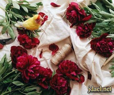 رمزيات وتساب ورد الحب والنعومة للبنات وبس